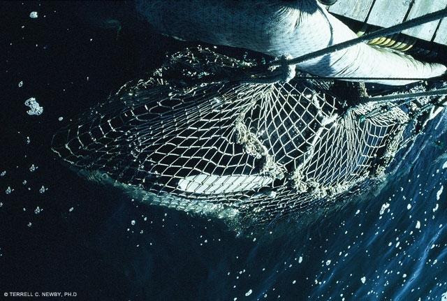 court-case-orca-capture