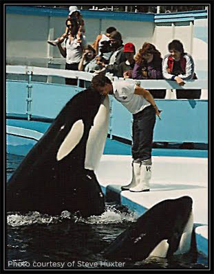 When Tilikum did not perform a trick correctly, food was withheld from both him and his tankmates, which caused a great deal of tension, and as a result, Haida and Nootka would bite Tilikum and rake the entire length of his body with their teeth.