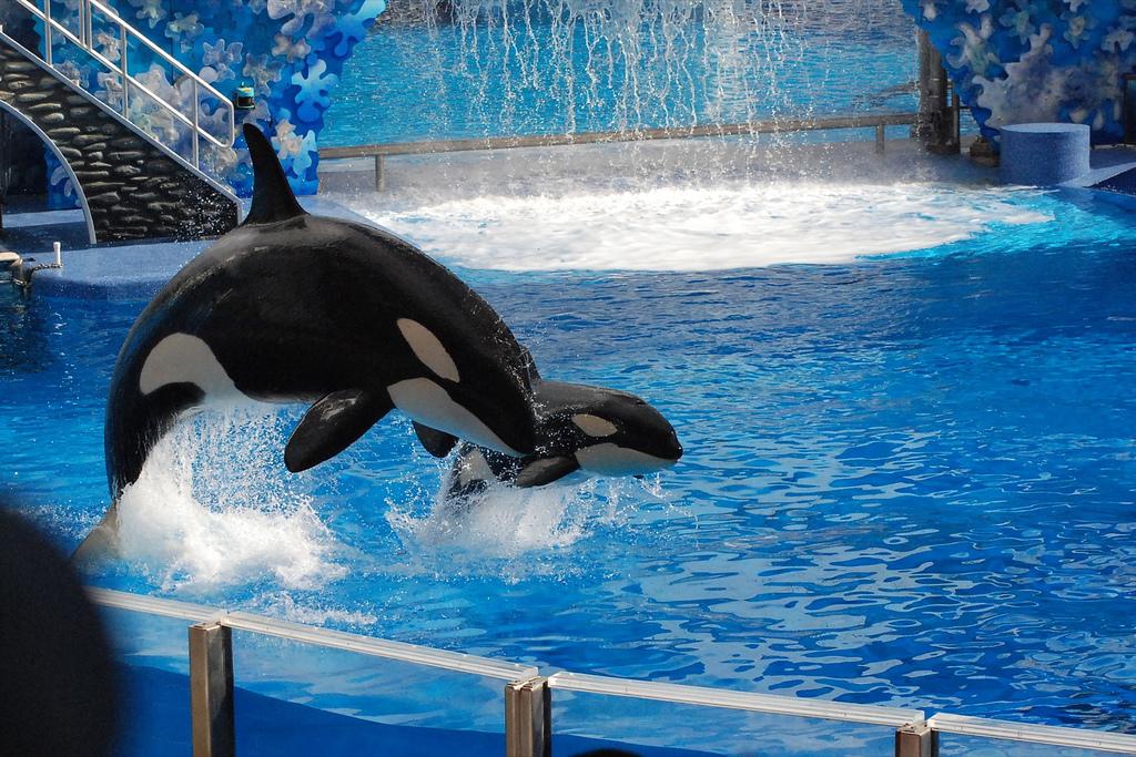 orca-baby