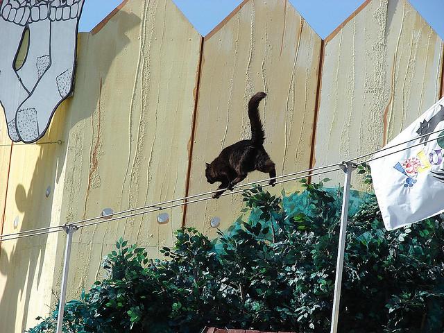cat-tightrope