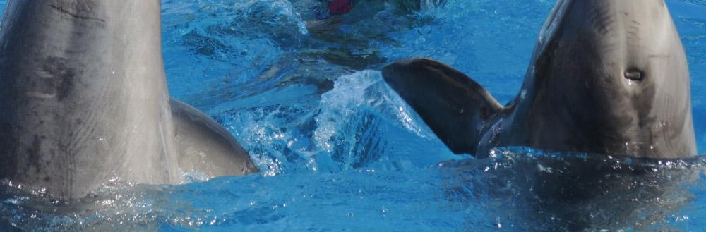 dolphin-healing