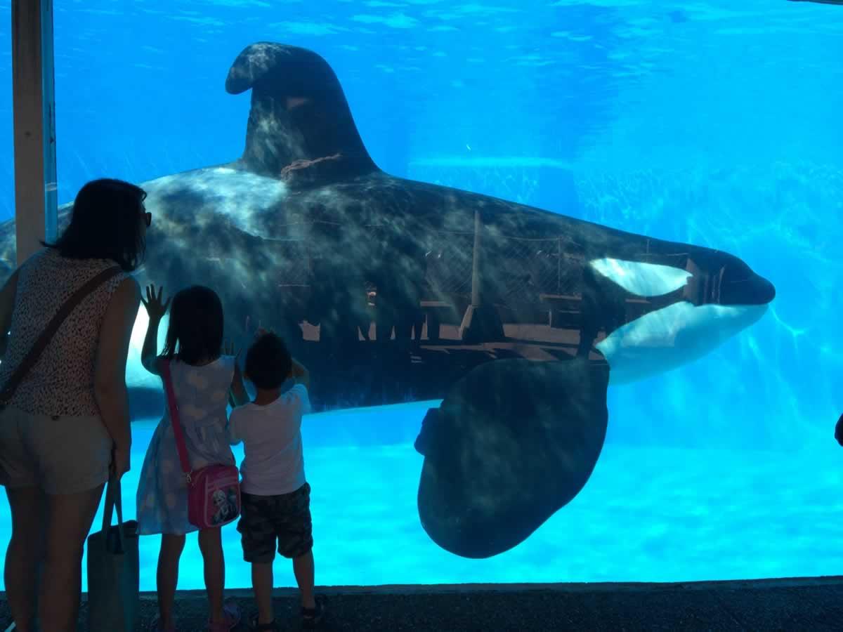 kids-seaworld-dorsal-fin