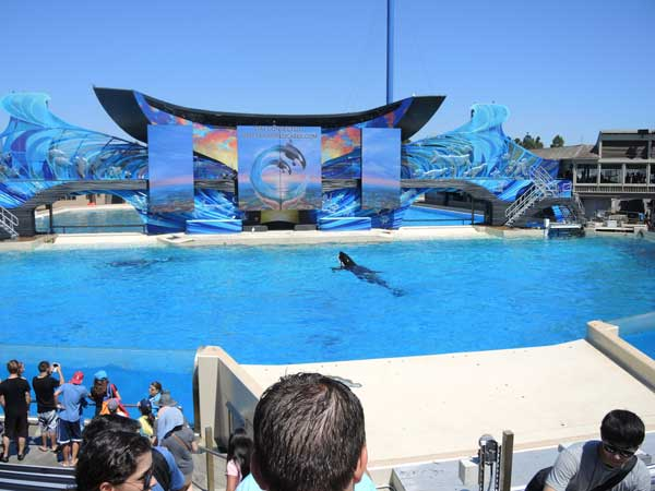 orca-floating-lifelessly