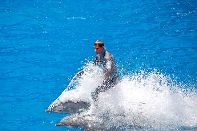 dolphin-riding