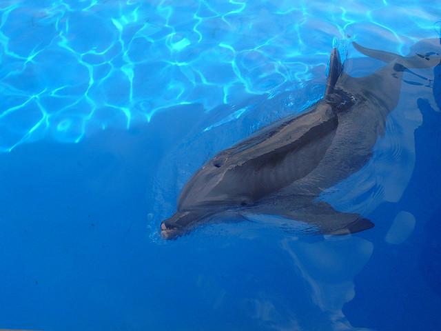 dolphin-sad