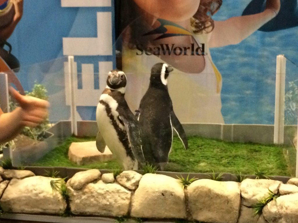 Penguins in an enclosure at a trade show for SeaWorld