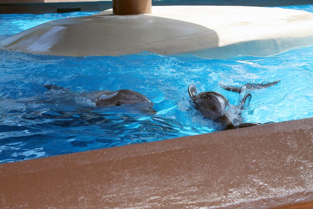 No Space for Dolphins at SeaWorld Orlando