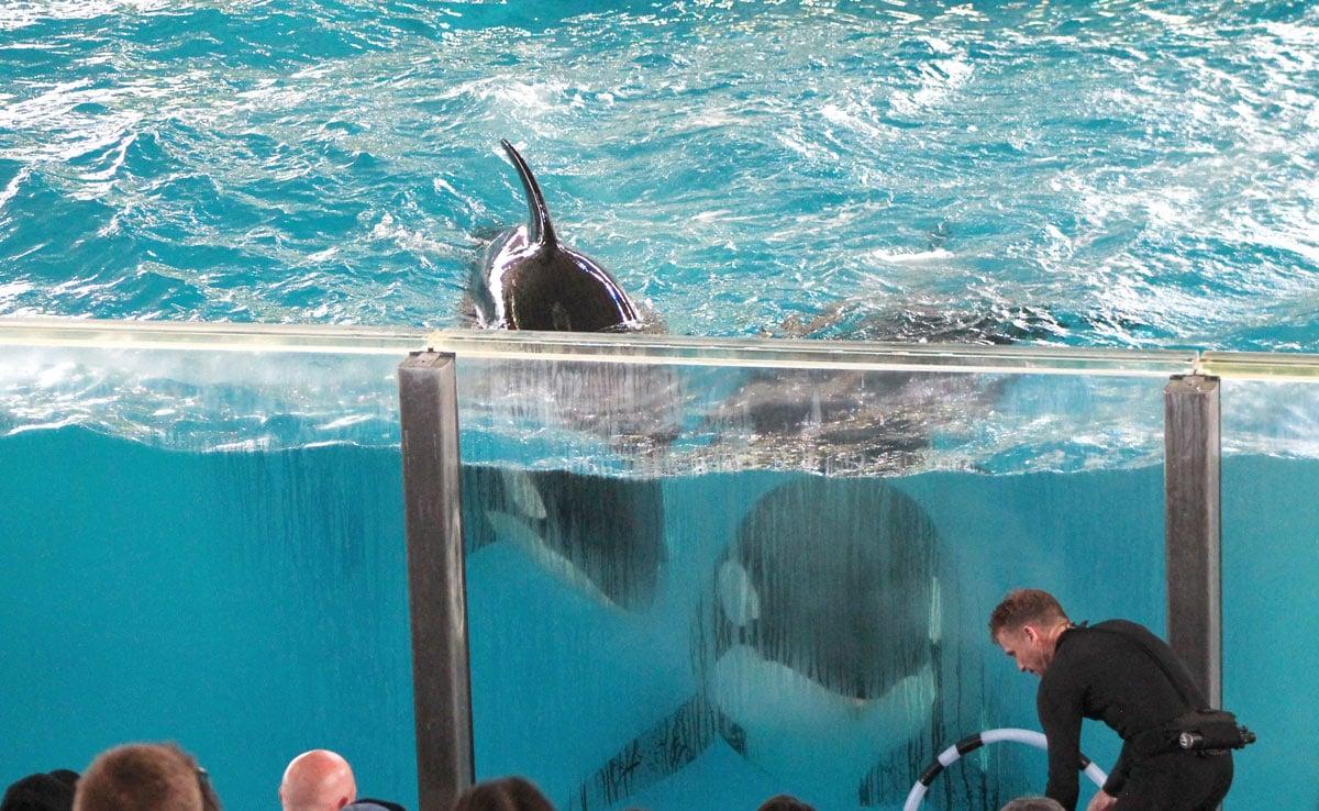 veterinarian visits seaworld san antonio - seaworld of hurt