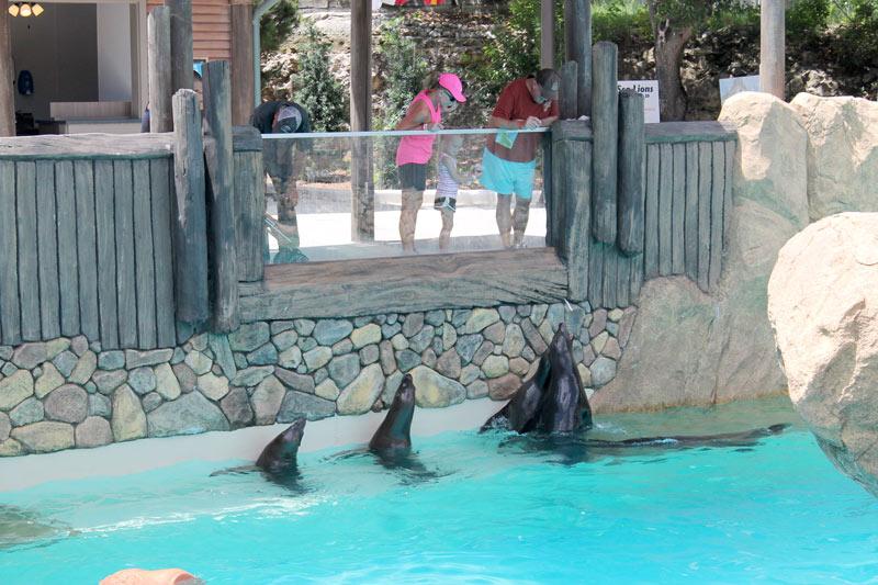 sea-lions-begging-hd