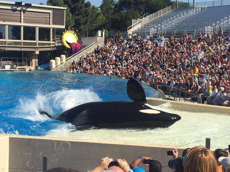 seaworld-orca-on-side