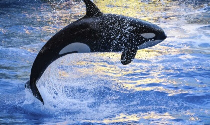 17 Horrible Things Seaworld Has Done Peta