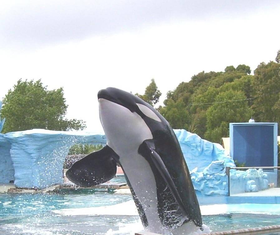 Orca-Tshamenk-Mundo-Marino-Argentina