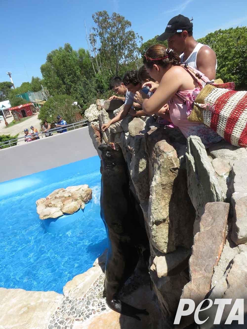 mundo-marino-guests-feeding-sea-lions-close-contact