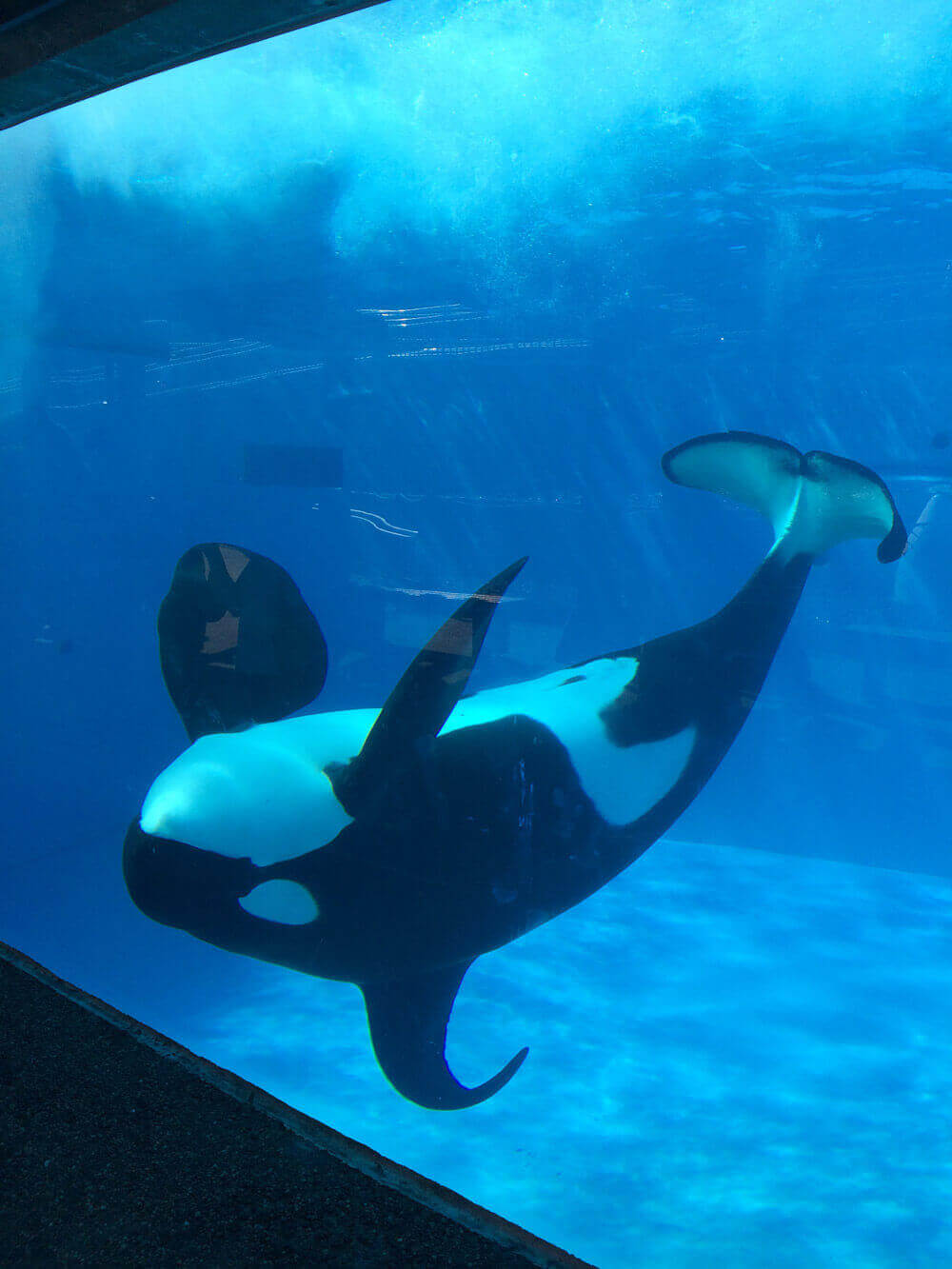 18 things that led seaworld to stop breeding orcas - seaworld of hurt