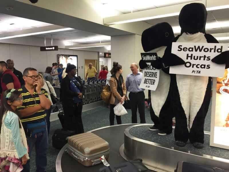 orcas baggage claim