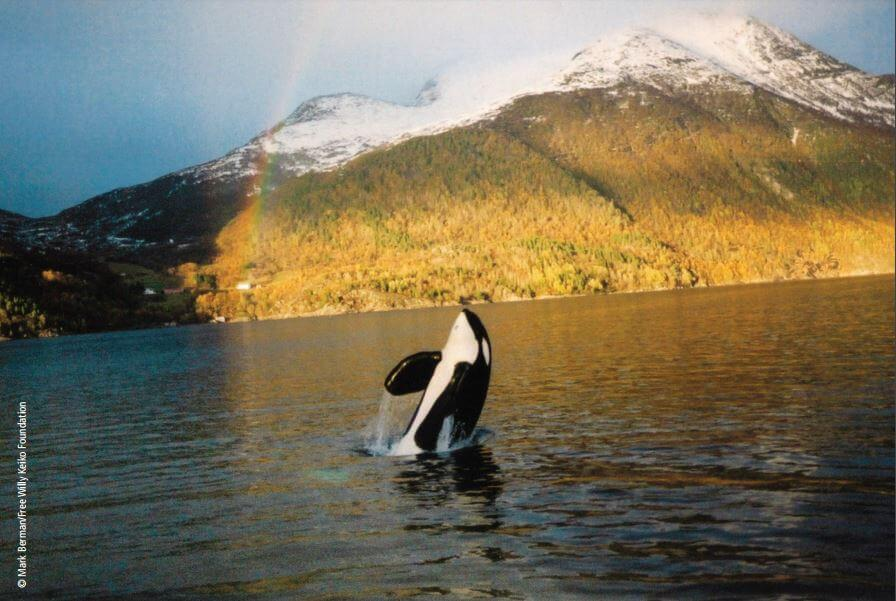 Are Orcas at SeaWorld Suffering From PTSD? - SeaWorld of Hurt