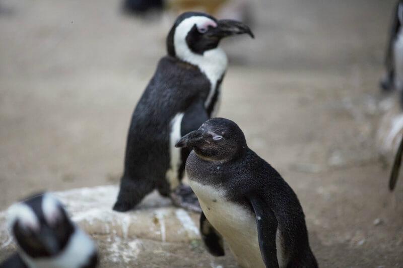 penguinenclosure