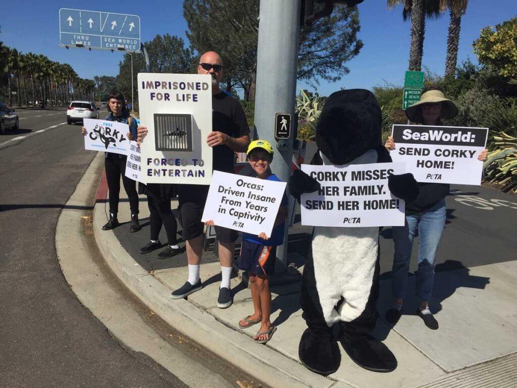 """Free Corky"" demo at SeaWorld San Diego"