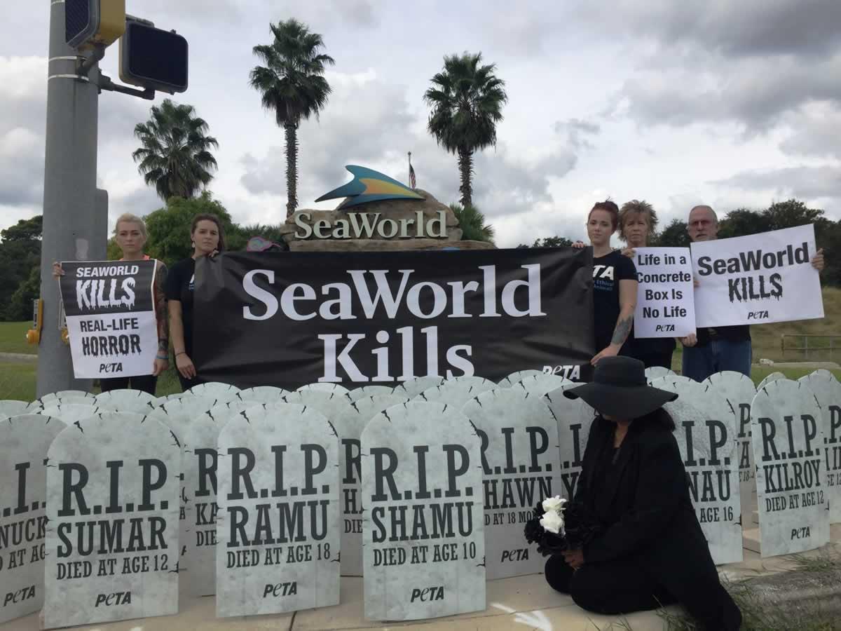 SeaWorld San Antonio graveyard demo