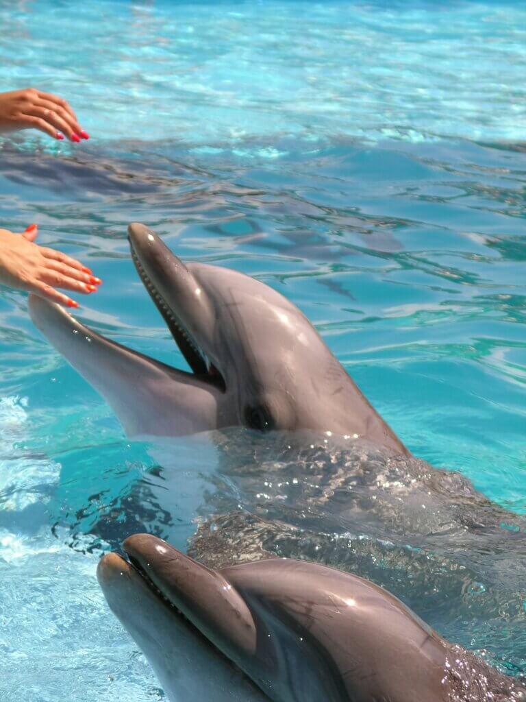 Dolphins in San Antonio Sea World park