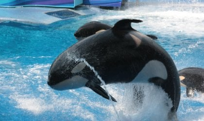 Were You Upset by What You Saw at SeaWorld? Demand a Refund