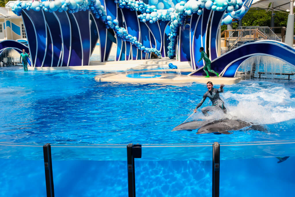 man on top of two dolphins swimming in a tank at seaworld