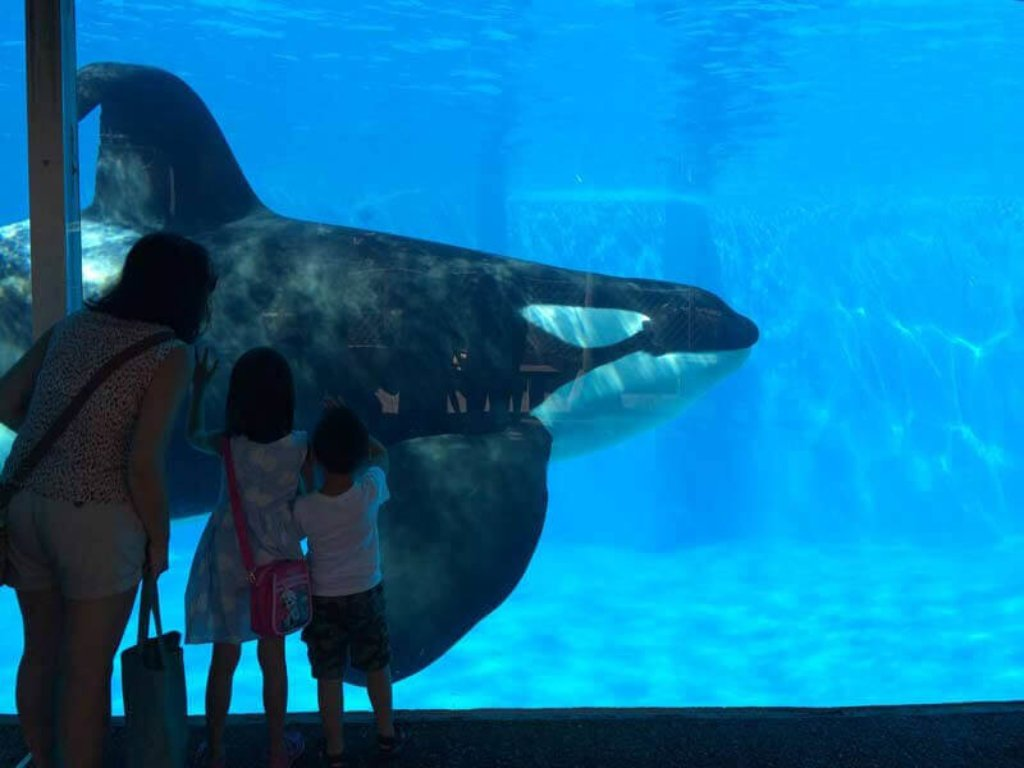 is seaworld bad or good for animals? these facts prove how animals suffer in marine parks