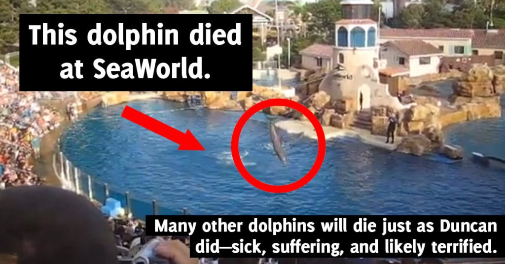 is seaworld bad? learn about animals who have died there