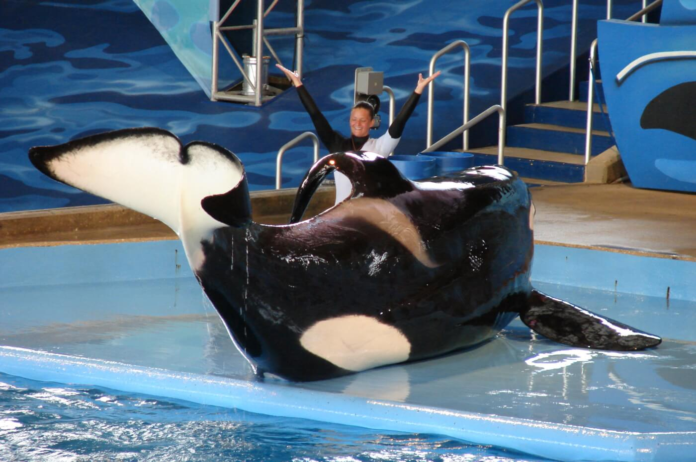 SeaWorld Wouldn't Help Tilikum—Urge It to Help His Son Kyuquot