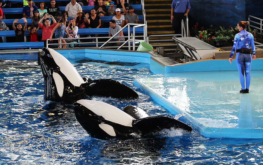 kyuquot the orca